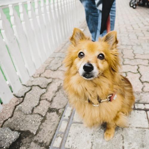 Barkly Barks Dog Festival, On The List Melbourne