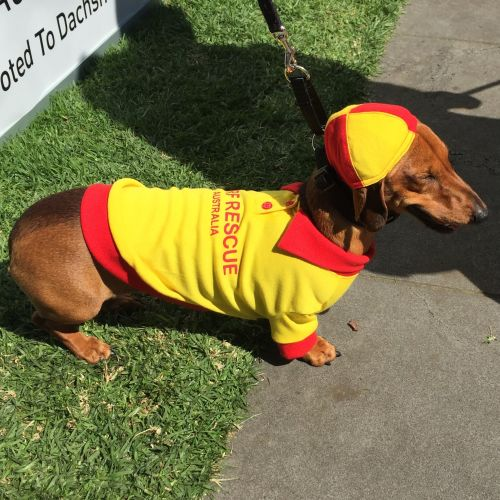 Dachshund Race, Running of Wieners, Hophaus, Hoptober, On The List Melbourne